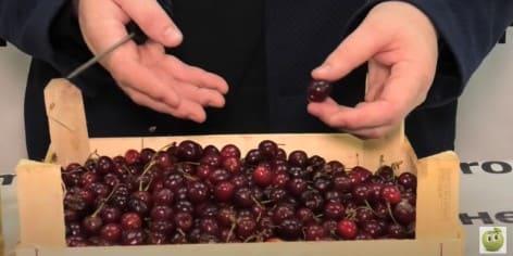 Рецепты самогона и других напитков из вишни